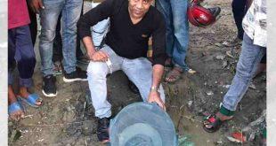 জেলের জালে পেট ভর্তি ডিমওয়ালা বিষধর 'রাসেল ভাইপার'